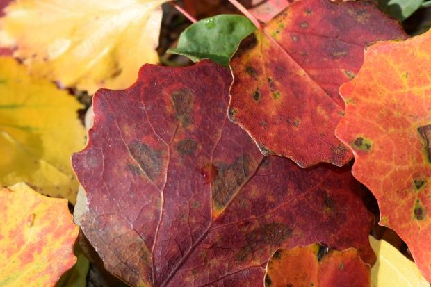 Höstens färger ger energi när man är trött