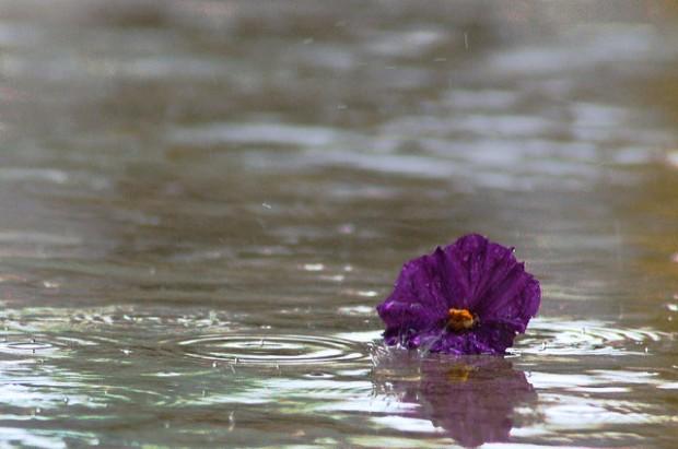 Det finns något trösterikt med regn trots allt