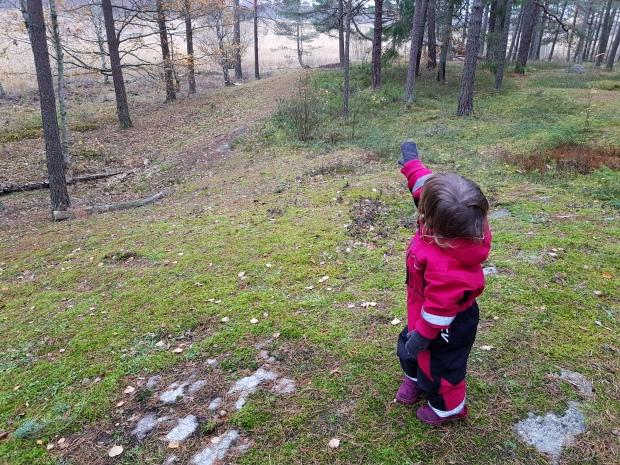 Skogsutflykt i Karlstad