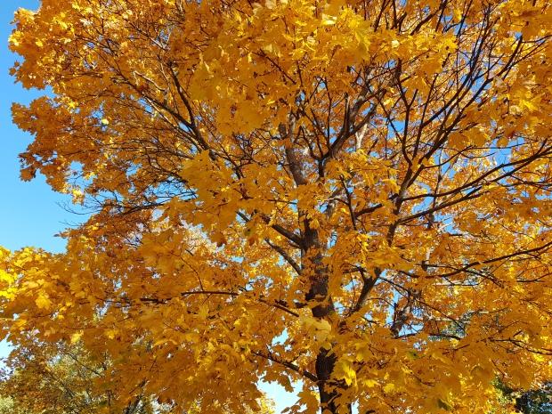 Hösten är så vacker med alla färger