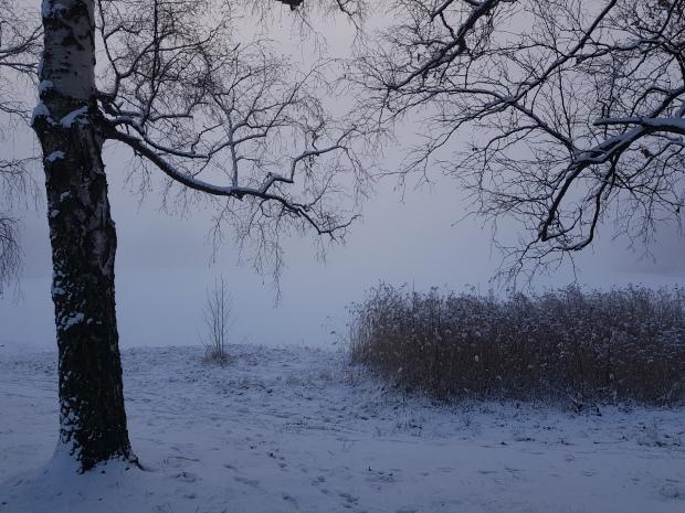 Dimmig morgon och drömsk känsla