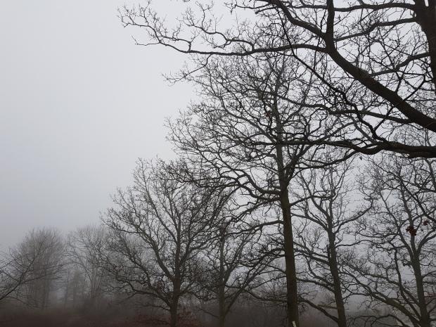 Dimmigt januariväder i Uddevalla