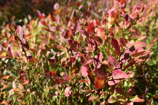 Den här hösten faller pusselbitarna på plats